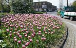 Rotonde met tulpen