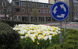 Rotonde met wit/gele tulpen