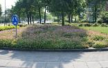 Rotonde met Geranium macrorrhizum
