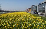 Industrieterrein Den Haag
