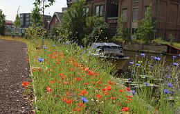 Biodiversiteit mix - Leiden
