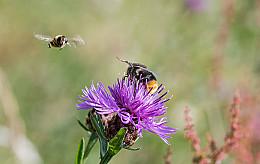 Lubbe Lisse zet zich samen met Honey Highway in voor bloemrijke gemeente bermen