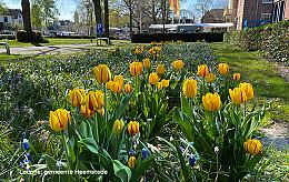 """Stichting Freedom Flame NL: """"Het leven in vrijheid"""""""