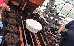 Zonnebloempitten planten voor Schiphol