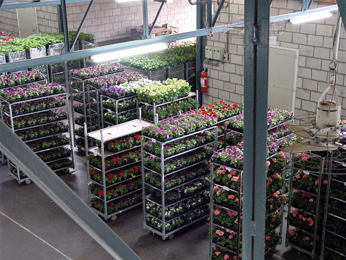 Delivery bedding plants, nursery activities